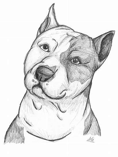 Drawing American Pitbull Drawings Sketch Pencil Bull