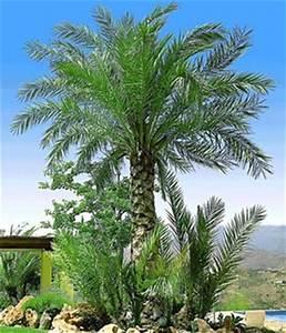 Palme Winterhart Kübel : sommerblumen winterharte palmen online kaufen bestellen ~ Michelbontemps.com Haus und Dekorationen