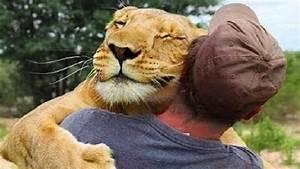 Animals Hugging People Animals Hugging Humans Compilation