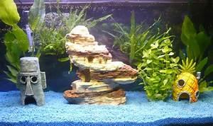 Aquarium Einrichten 60l : barschbecken einrichten pflanzen hilfe aquarium forum ~ Michelbontemps.com Haus und Dekorationen