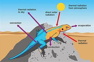 Week 3  Animals And Ecosystems At The Extremes  Reptiles