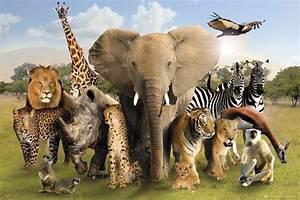 Zwierzęta Afryki - plakat - Galeria FLASH - eplakaty.pl