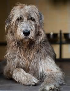 Low Shed Dog Breeds by Top 10 Most Expensive Dog Breeds Top Inspired