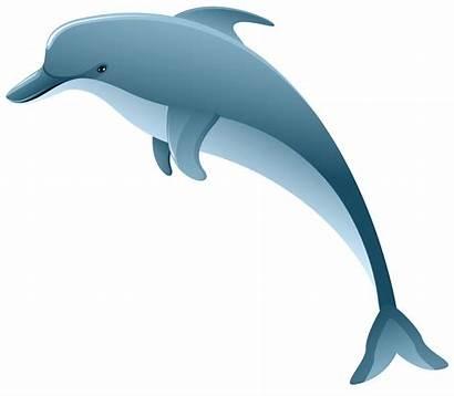 Dolphin Transparent Clip Clipart Underwater Bottlenose Poissons