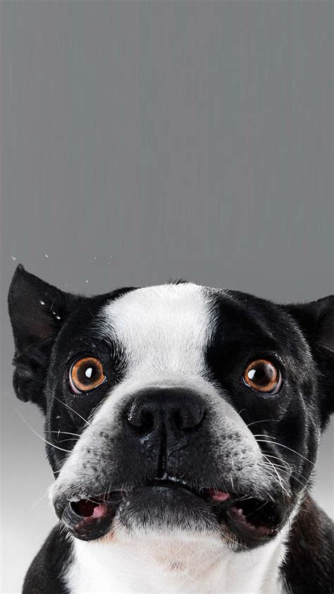 Funny dog face - Best htc one wallpapers, free and easy to ...