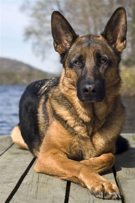 Die schönsten hundenamen für weibliche und männliche hunde. Hunde Bilder Süß Kostenlos Herunterladen | Bilder und Sprüche für Whatsapp und Facebook kostenlos