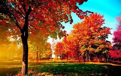 Desktop Fall Wallpapers Trees Autumn Background Pixelstalk