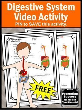 digestive system activity video human body systems