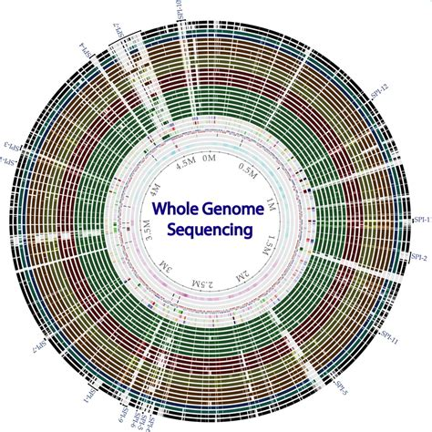 genome sequencing  bacterial