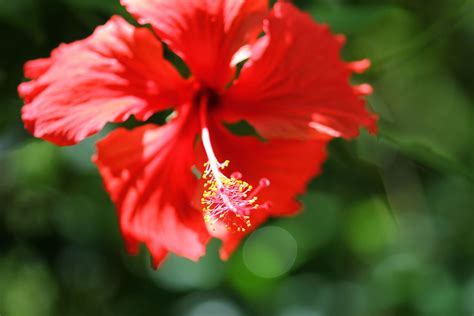flowers   cook islands travels  peter kerry