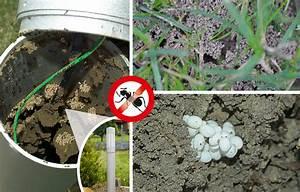 Ameisen Im Garten : blog gardigo ~ Frokenaadalensverden.com Haus und Dekorationen