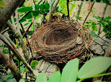 Empty Nests - Imogen Clark