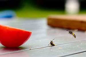 Hausmittel Gegen Spinnen : nat rliche hausmittel gegen insekten im haushalt ~ Whattoseeinmadrid.com Haus und Dekorationen