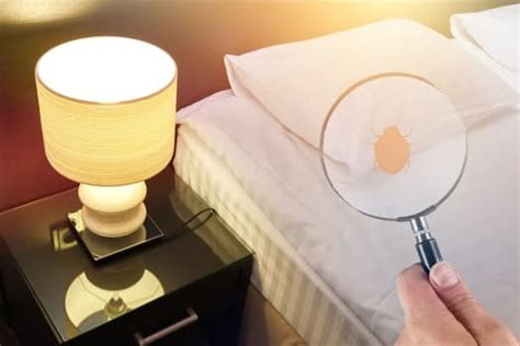 check furniture bed bugs bed bugs insider