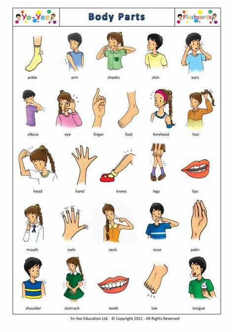 body parts flashcards  kids partes del cuerpo