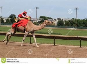 Course De Chameau : course de chameau photo stock ditorial image 56867893 ~ Medecine-chirurgie-esthetiques.com Avis de Voitures