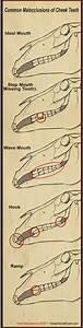Dental  U0026 Oral Exam
