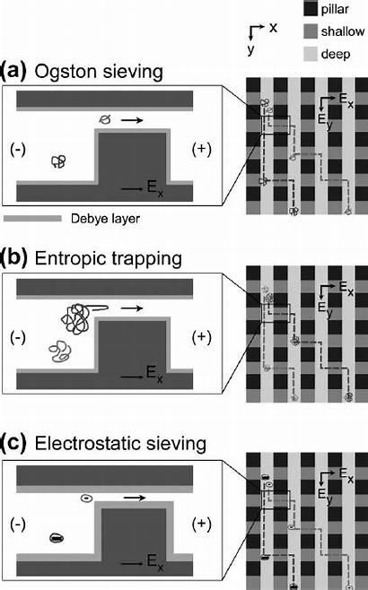 Shallow Gaps Through Sieving Anisotropic Nanometre Depending
