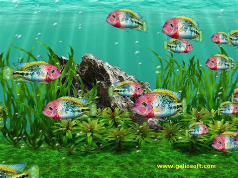 Animated Fish Wallpapers For Mobile Free - aquarium animated wallpaper images wallpapers