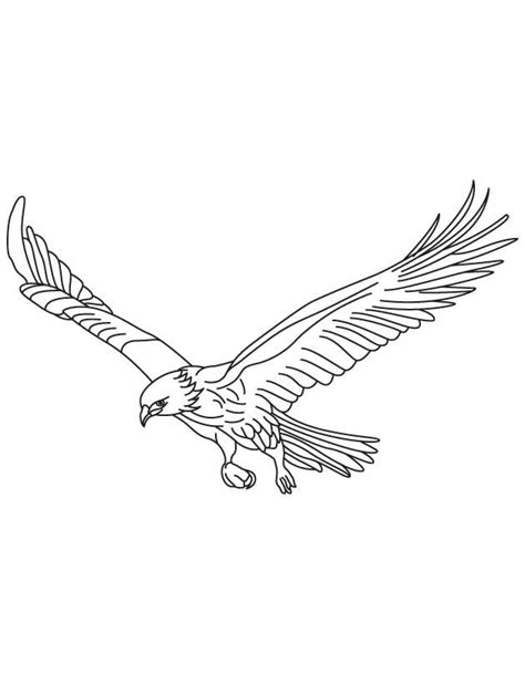 broad wings bird  flight coloring page eagle coloring