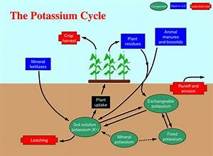 The Role Of Potassium In The Garden