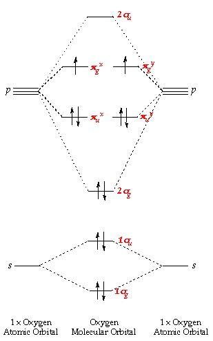 iiss altamura molecole  movimento