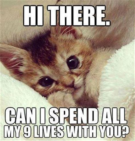 Funny I Like You Memes - i like you animal meme www pixshark com images galleries with a bite
