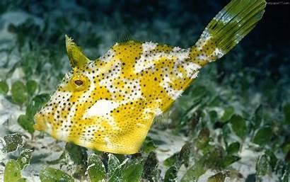 Fish Exotic Unique Sea Animals Wallpapers Background