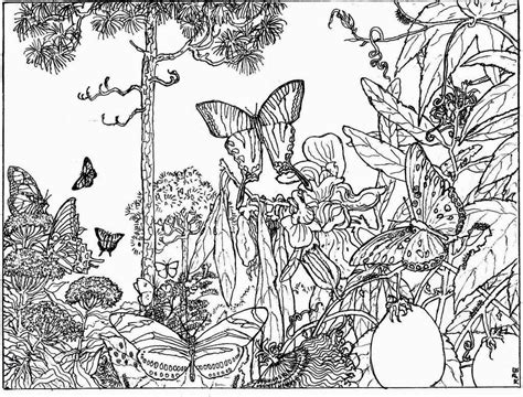nature alive forest hd coloring pages  adult