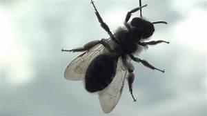 Comment Chasser Les Mouches : 5 astuces efficaces pour lutter contre les mouches ~ Melissatoandfro.com Idées de Décoration