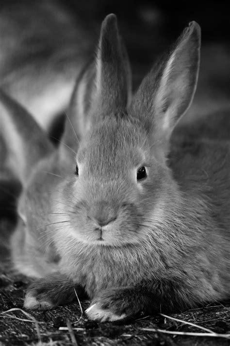 Bunny Rabbit Free Stock Photo - Public Domain Pictures