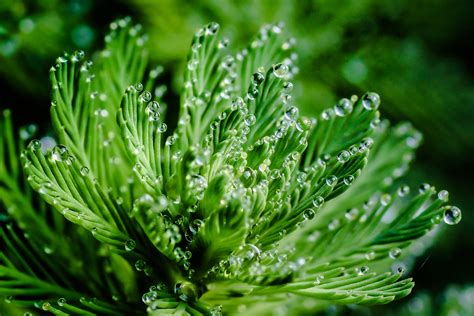 green plants micro photography parrot watermilfoil hd