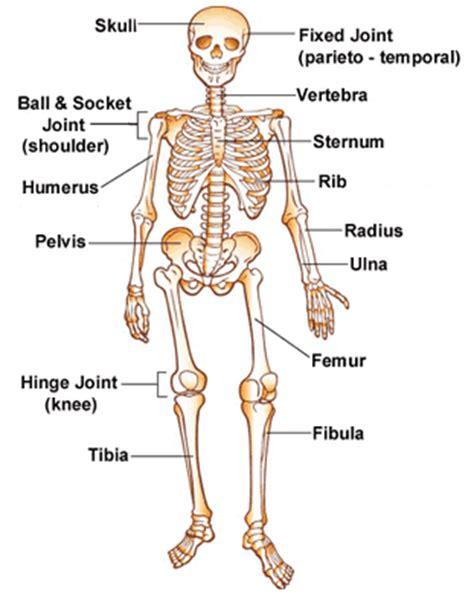 Shake Dem Halloween Bones Download by Gallery Skeleton Bones Song Anatomy Diagram Charts