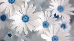 Blue Wallpaper with White Flowers - WallpaperSafari
