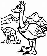 Ostrich Coloring sketch template