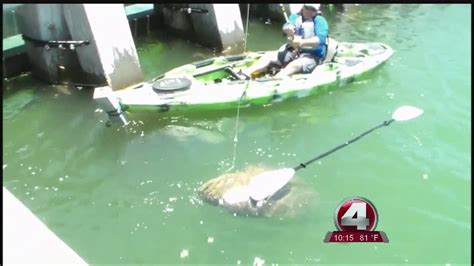 grouper kayak caught florida goliath