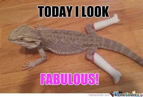 Lizard Meme Fabulous Lizard Fabulous Lizards Meme And