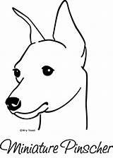 Pinscher Mini Doberman Miniature Min Pins Pinchers Pincher Drawings Dog Flickr Coloring Dogs Template Sketch Toast sketch template