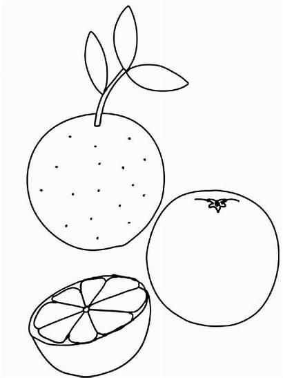 Coloring Fruits Pages Citrus Printable Fruit Breadfruit