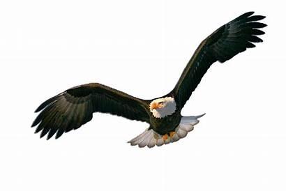 Elang Burung Garuda Unggas Jenis Mempunyai Paling
