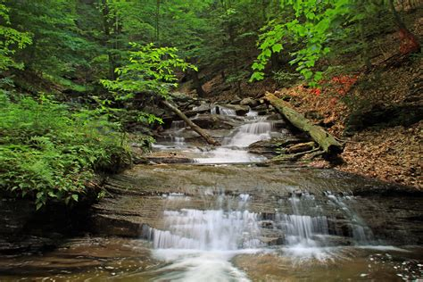 picture water forest moss waterfall stream