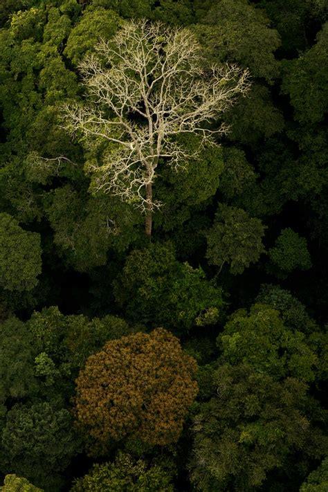 vogelperspektive regenwald baum das geheimnis der baeume