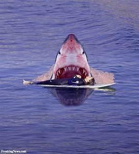 Shark Attacks Sleeping Surfer