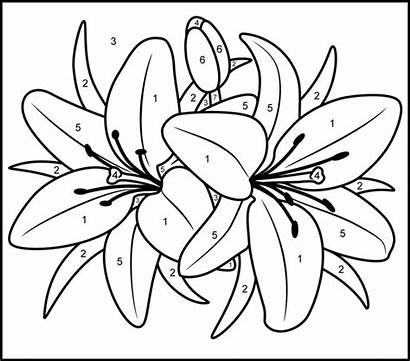 Coloring Paint Numbers Adult Pages Printable