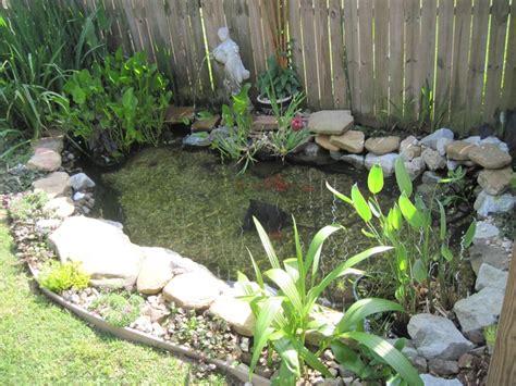 Garden Goldfish by My Goldfish Pond From My Yard Goldfish