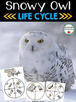 snowy owl life cycle wheel  poster set  sarah tighe tpt