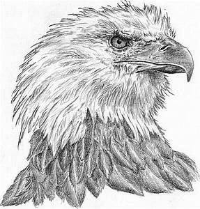 Kunst Zeichnungen Bleistift : pin von tomg auf zeichnungen pinterest tier palettenw nde und zeichnungen ~ Yasmunasinghe.com Haus und Dekorationen