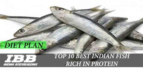 top   indian fishes  seafood rich  protein ibb