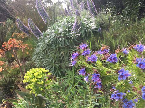 garden san anselmo san anselmo hillside sanctuary garden dig your garden