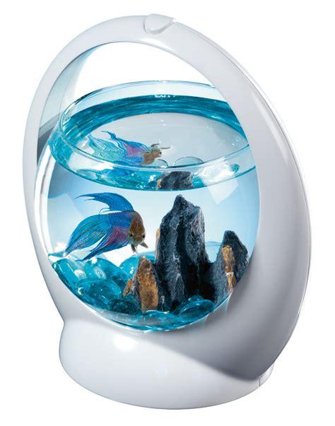 aquarium poisson archives poisson naturel